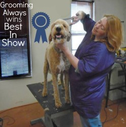 Dog Grooming Academy Boarding Kennel's of Albuquerque