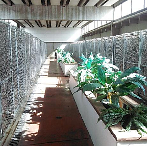 Dog Boarding Kennels Albuquerque